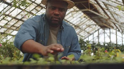 Afro-American Farmer Planting Seeds in Greenhouse