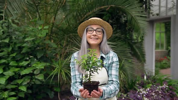 Thumbnail for Senior Woman in Hat Standing in Greenhouse and Presenting Decorative Plant into Camera