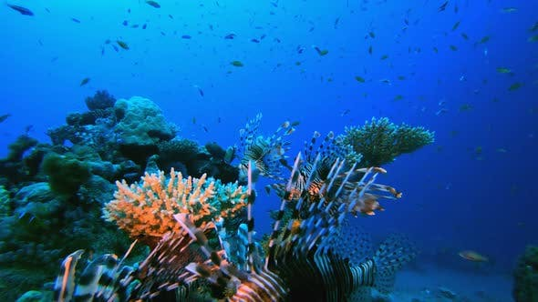 Thumbnail for Tropical Coral Reef Seascape