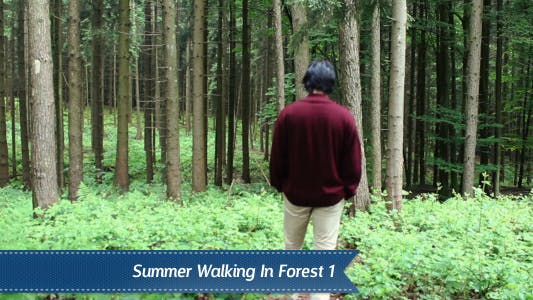 Thumbnail for Walking Forest
