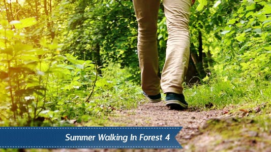 Cover Image for Walking Forest