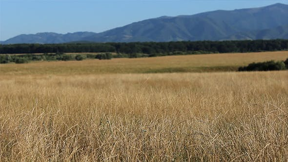 Thumbnail for Dry Grass Wild Lands
