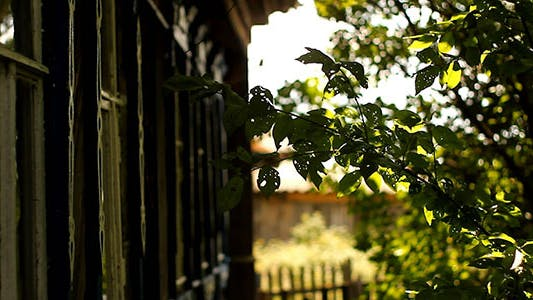 Thumbnail for Country House and Green Tree Wind Sunshine Bokeh
