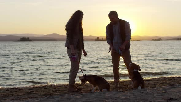 Cover Image for Owners Giving Treats to Dogs on Lake Beach at Sunset