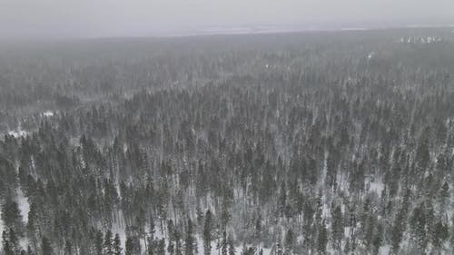 Aerial View of Forest a Heavy Snowfall Severe Winter Weather Conditions