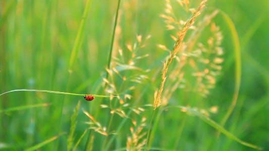 Thumbnail for Ladybird