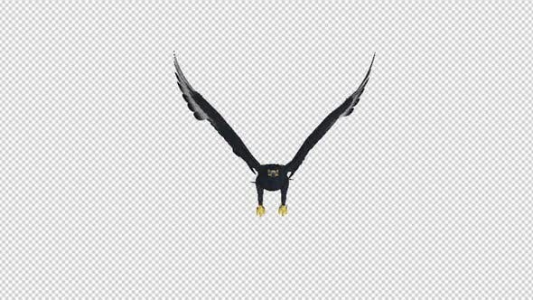 Thumbnail for African Eagle - 4K Flying Loop - Front View