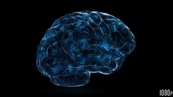 Thumbnail for Digital Technology of a Human Brain Concept