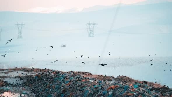 City Waste Dump Site