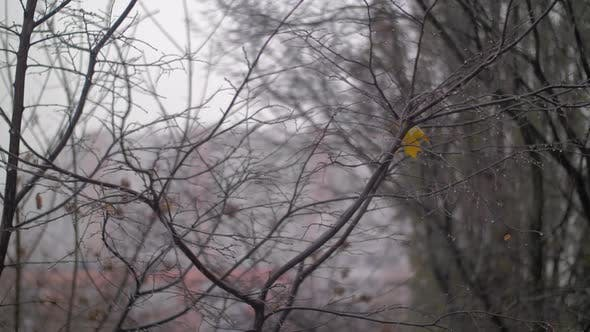 Thumbnail for - Late Autumn Scene with Bare Trees and Falling Snow