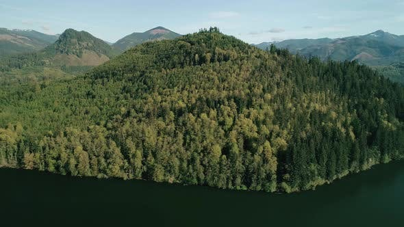 Thumbnail for Thick Green Trees Forest Lake Aerial