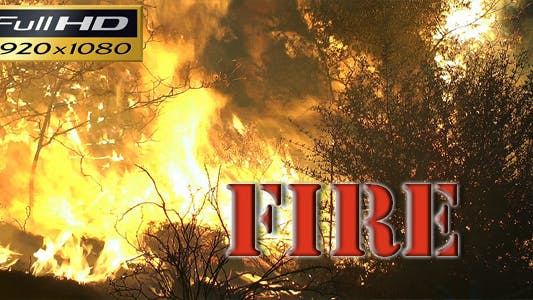 Thumbnail for Fire in the Forest