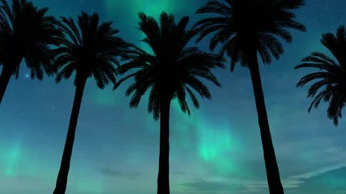 Driving Under Palm Trees With Aurora in Background
