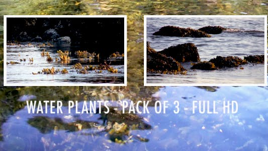 Thumbnail for Water Plants  - Pack 3