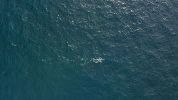 Thumbnail for Aerial View Over Rippling Ocean Surface with the Wild Whale Seen Swimming Alone.
