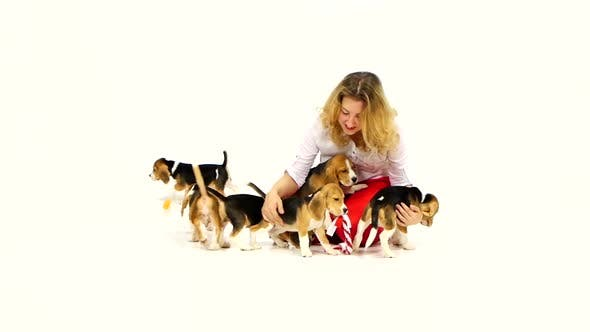 Thumbnail for Woman Played with Cute Beagle Puppy on a White on Studio. Slow Motion