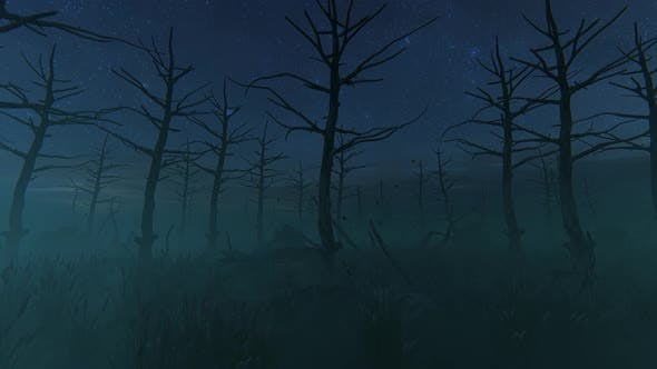 Thumbnail for Scary Forest At Night 2K