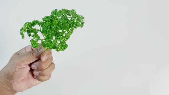 Thumbnail for Fresh Parsley Herb In Hand