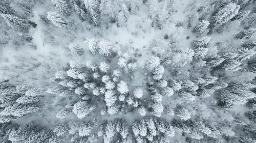 Directly Above View of Snow Trees