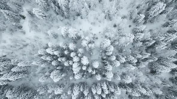 Thumbnail for Directly Above View of Snow Trees