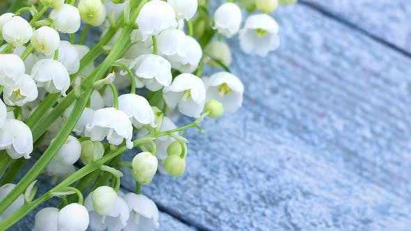 Small Fragile Fragrant White Spring Flowers of Lily of the Valley As a Bouquet Lie on a Wooden Light