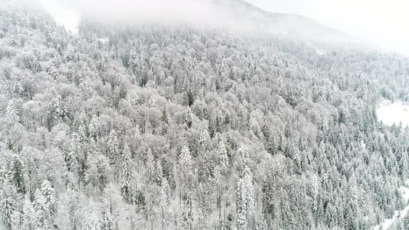 Thumbnail for . Flight Above Ukraine Winter Forest, Aerial Top View.