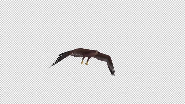 Thumbnail for Tropical Kite - Flying Loop - Side Angle