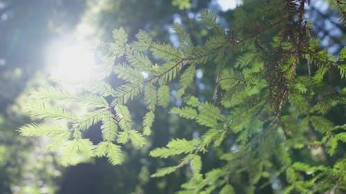 Close-Up Of Green Nature