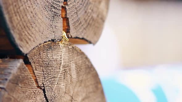 Thumbnail for Close-up, Slow Motion: The Wasps Fly Up, Build Nest