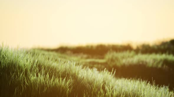 Thumbnail for Green Field at Sunrise with Blue Sky