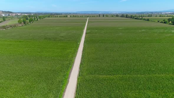 Thumbnail for Aerial View of Agriculture and Rural Farming. Top View of the Grain Fields