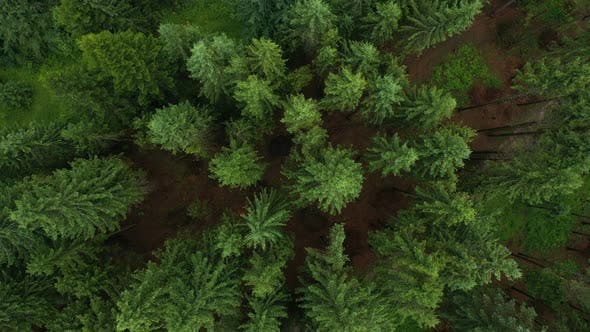 Forest Top Aerial View