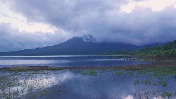 White Cranes and Arenal Volcano at Arenal Lake, Costa Rica. Aerial drone view