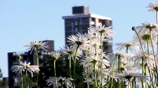 Thumbnail for City Life - Houses and Flowers - II