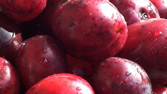 Thumbnail for Ripe Plums Watered