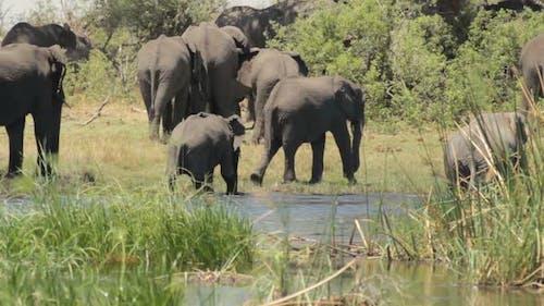 African elephant Africa safari wildlife and wilderness
