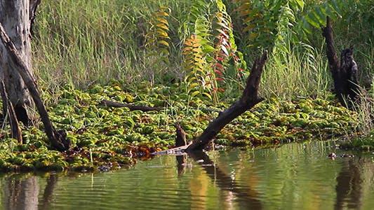 Swamp Evening