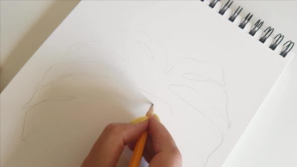 Woman darwing Monstera leaf pensil close up