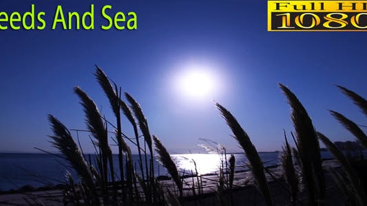 Thumbnail for Reeds and Sea