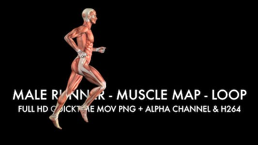 Thumbnail for Muscle Map - Male Runner - Loop