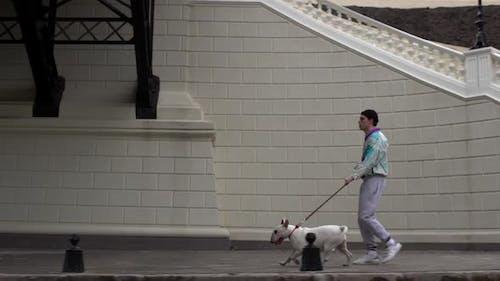 Portrait of Man in Trendy Sportswear Walking Along Street with His Pedigree Dog Holding Bullterrier