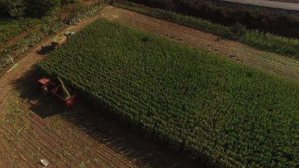 Thumbnail for Harvesting