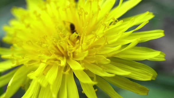 Ant And The Dandelion