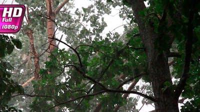 Thunderstorm Under a Tree