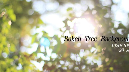 Cover Image for Bokeh Tree Background 3