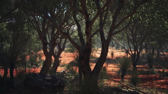 Red Sand Bush with Trees