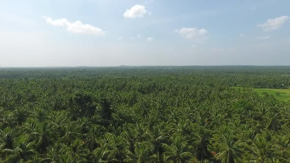 Thumbnail for Rising Above A Coconut Plantation