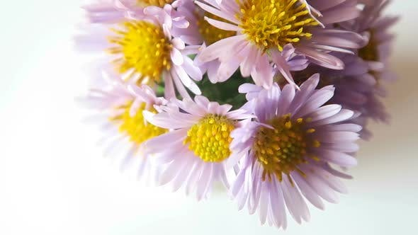 Thumbnail for Rotation Of Wildflowers 2