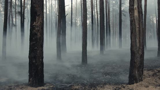 Close Up Shot of Smoking Grounds in Forest After Bonfire, Slow Motion