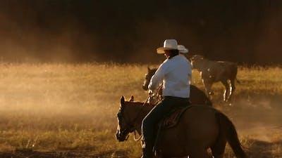 Cowboy on horses at sunset, slow motion